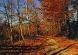 jadwiga_gaweaczyk_droga-przez-las